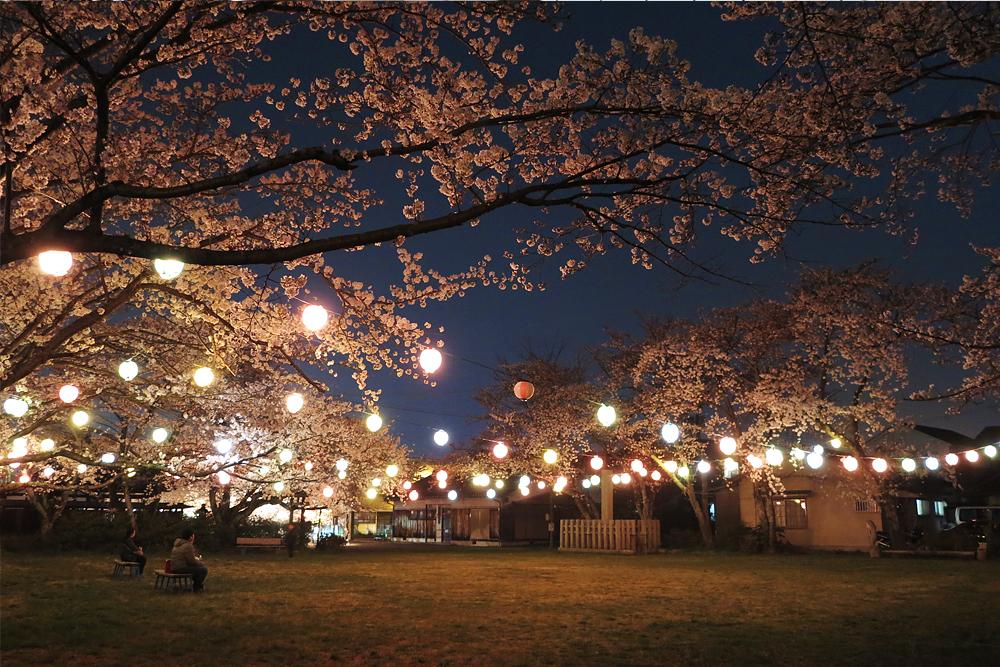 甲賀市水口町藤栄神社の夜桜 / 桜 in 甲賀市 / 甲賀市の桜といえばココ!