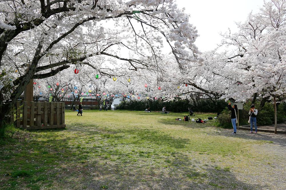 水口町 藤栄神社の桜