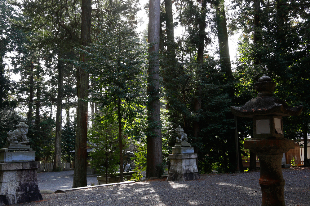 珍しい山野草 ユキワリイチゲ(土山町・瀧樹神社)