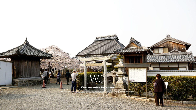 大福寺の桜・甲賀市甲賀町岩室